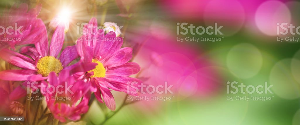 Detail of a colorful pansy stock photo