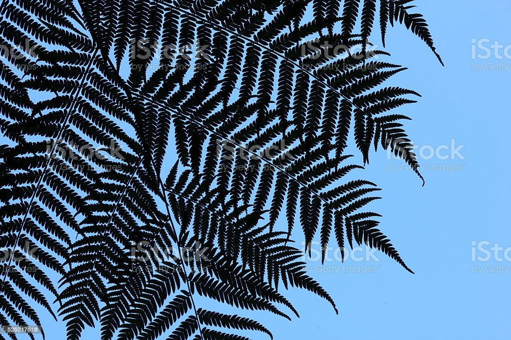 Detail of a fern tree in New Zealand stock photo