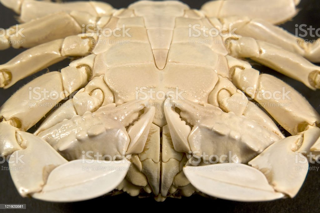 detail of a moon crab stock photo