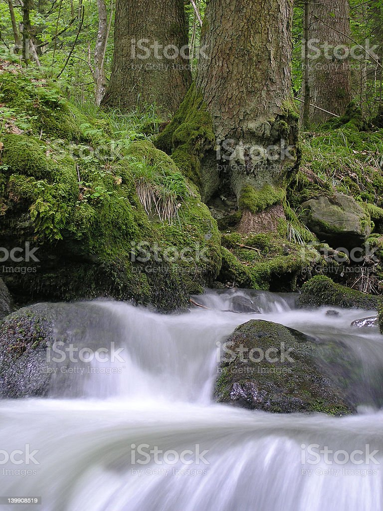 Detail of a mountain creek royalty-free stock photo