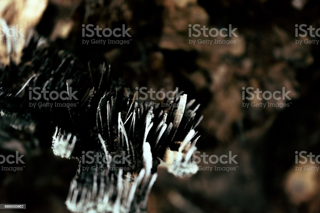 Detail of a rotting tree trunk stock photo