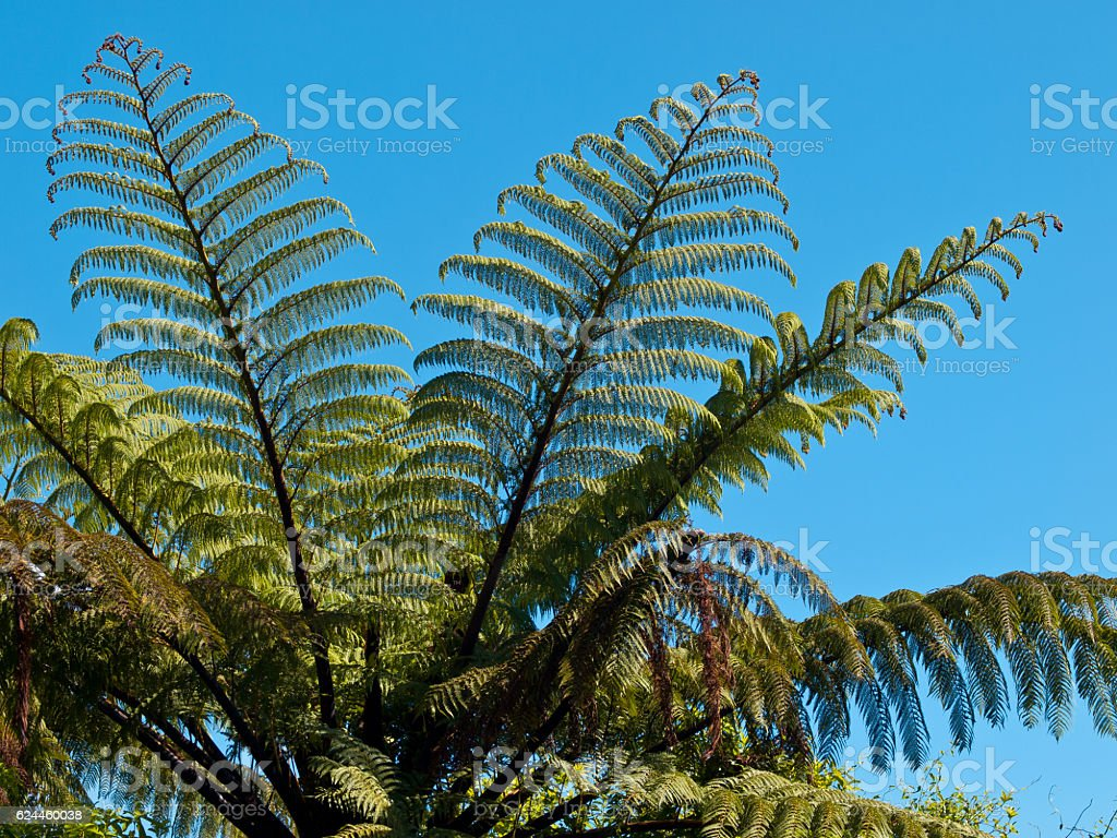 Detail of a tree fern stock photo
