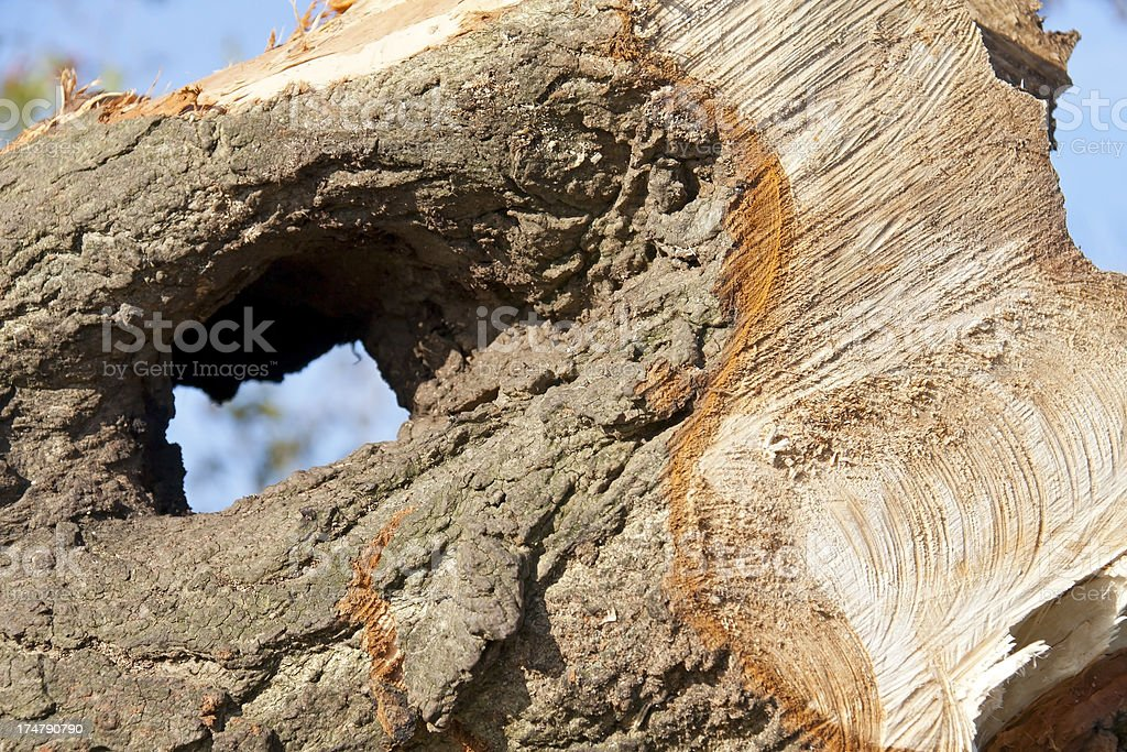 Detail of a tree stump royalty-free stock photo