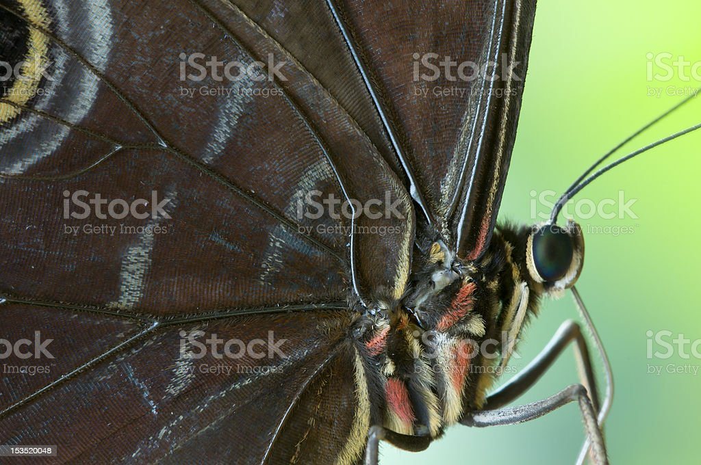 Detail of a tropical butterfly stock photo