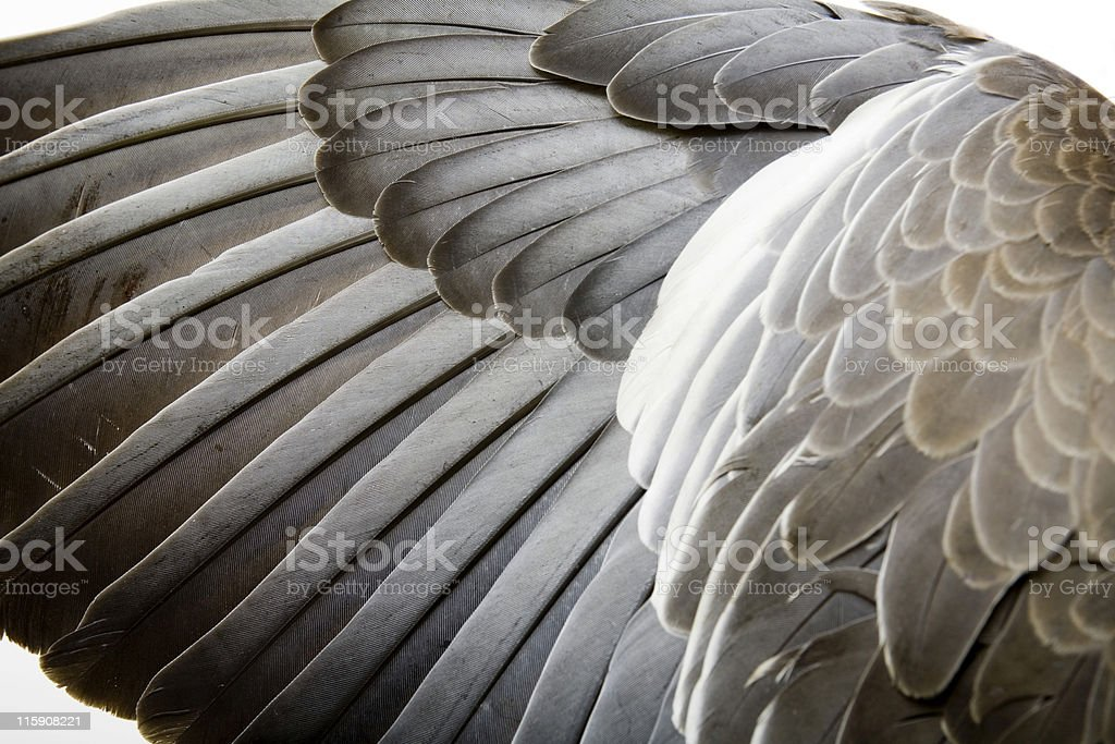 Detail of a wing royalty-free stock photo