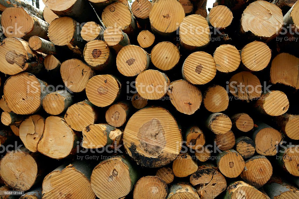 Detail of a woodpile stock photo