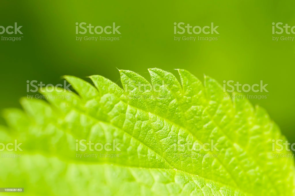 Detail of Abstract Nettle Leaf - Soft Focus stock photo