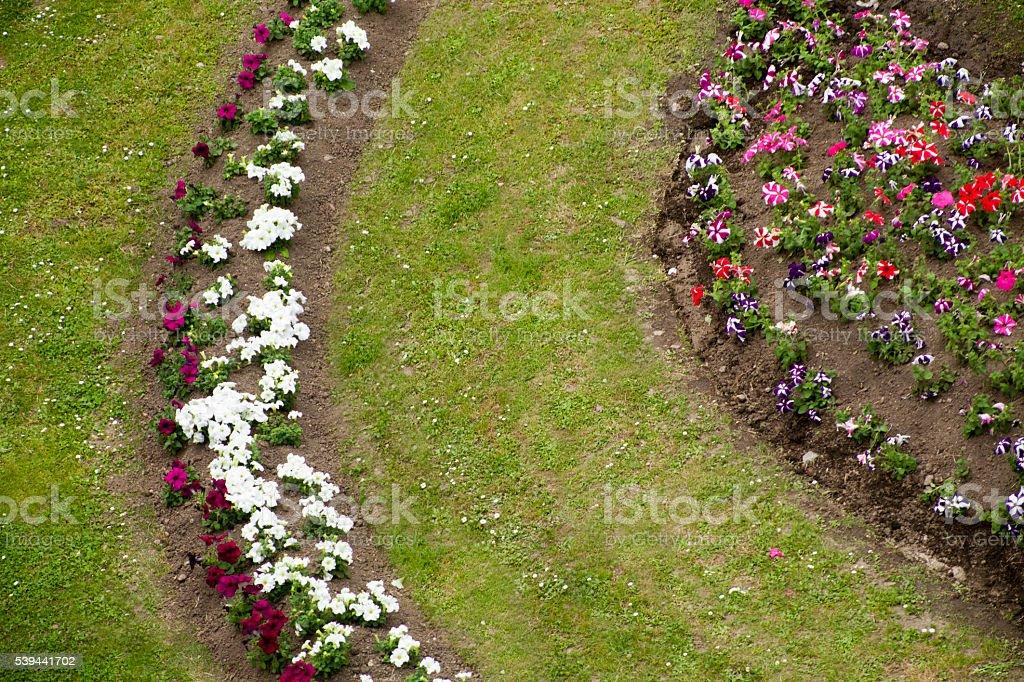 Detail of beautiful garden flower bed stock photo