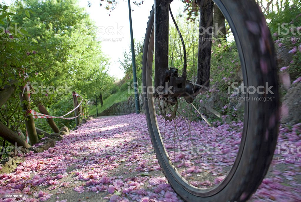 Detail of bicycle wheel spinning over fallen blossoms stock photo