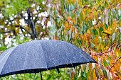 detail of black umbrella in the rain