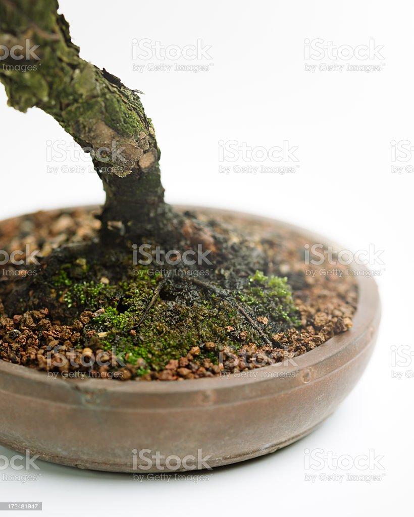 Detail of bonsai pot royalty-free stock photo