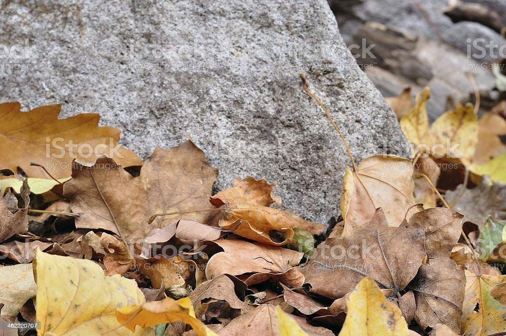 Szczegóły brązowy spadek jesienią liście i kamienia zbiór zdjęć royalty-free