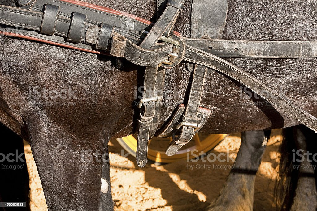 Detail of buckles and straps a horse stock photo