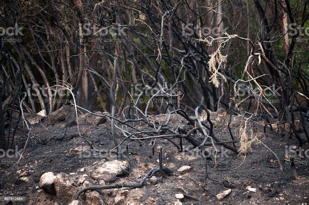 Detail of burnt forest stock photo
