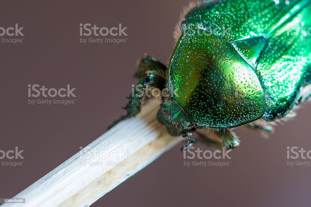 detail of dotted armature of green smaragd beetle bug stock photo