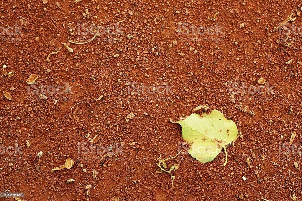 Detail of dry leaf on tennis court. Dry crushed bricks stock photo