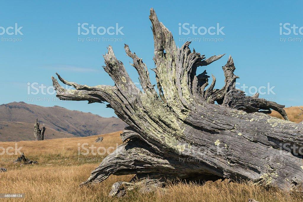 detail of felled tree stock photo