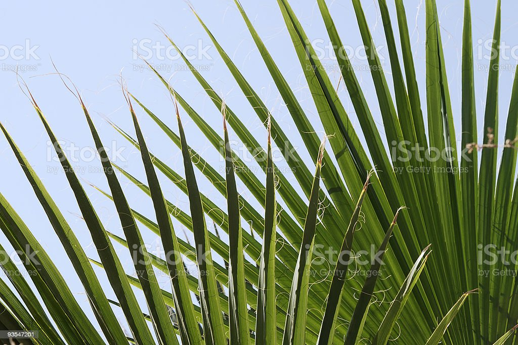 Detail of fern leaves. Spain royalty-free stock photo