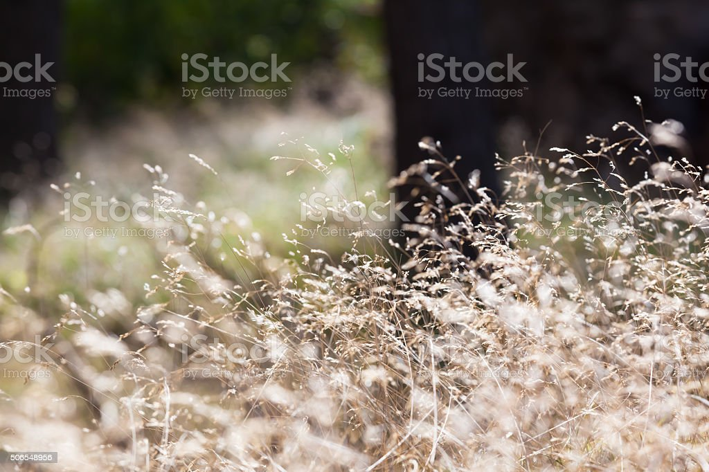Detail of Grasses in the Wood stock photo