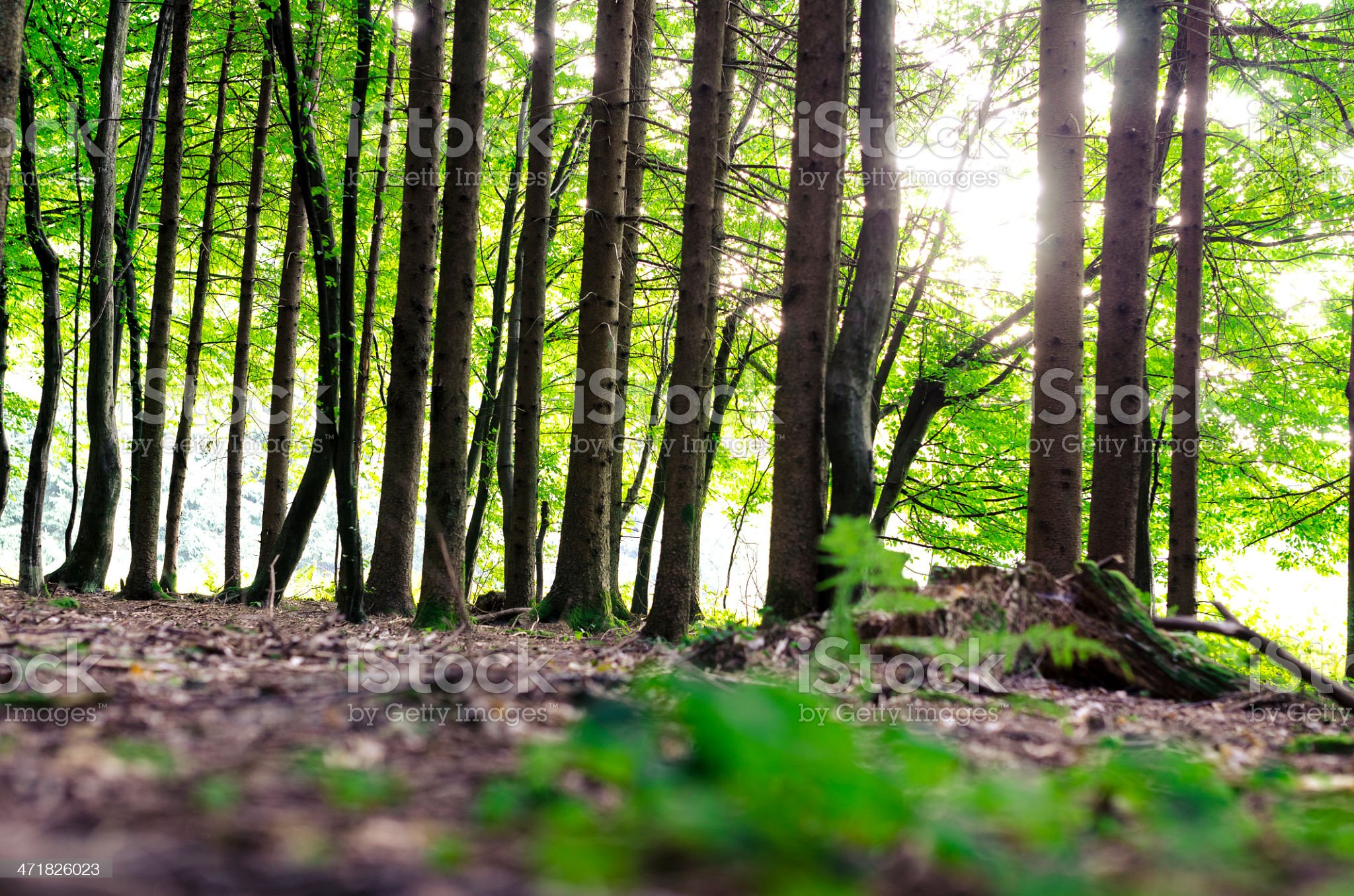 Detail of green forest royalty-free stock photo