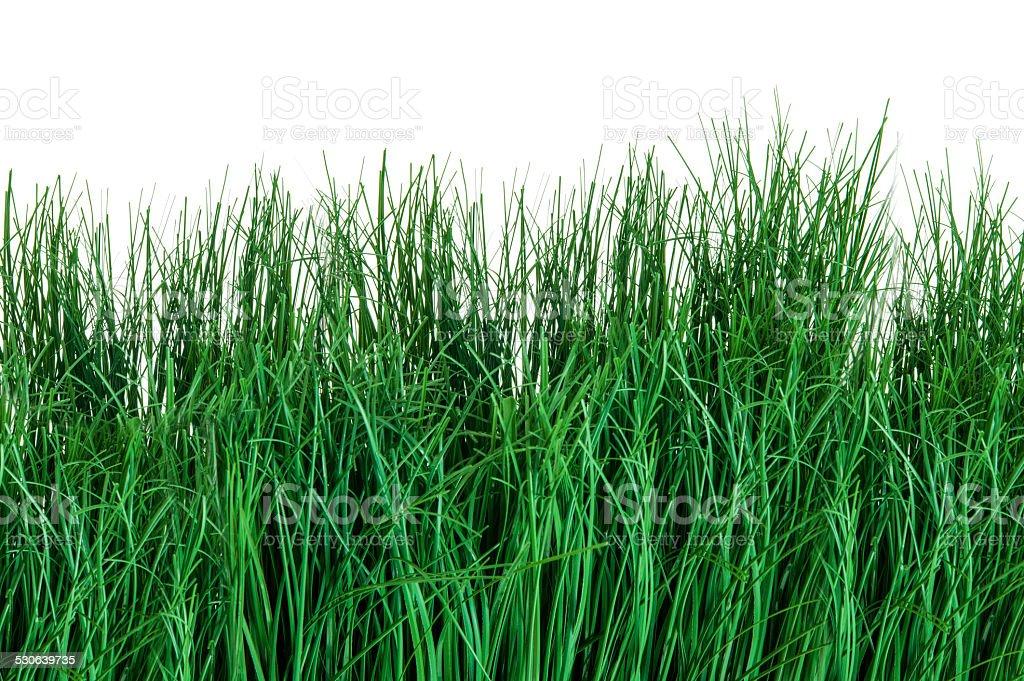 Detail of green grass stock photo