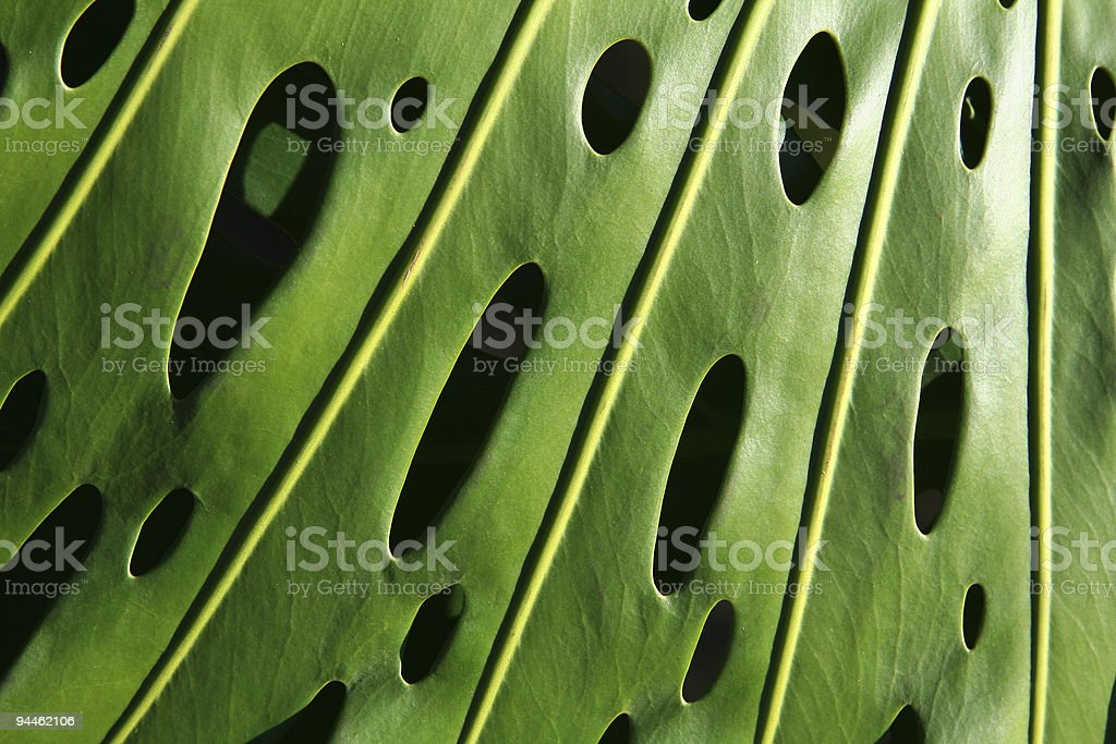 Detail of green leaf stock photo
