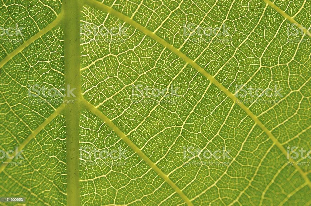 Szczegół tekstura zielony liść zbiór zdjęć royalty-free