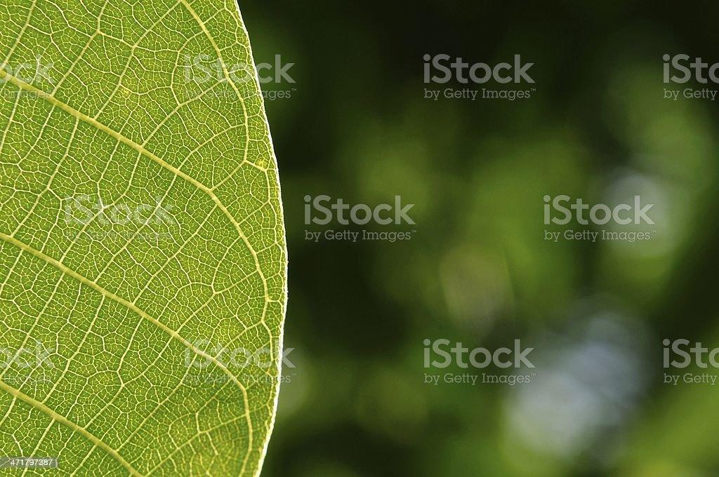 Szczegół z niewyraźne tło zielony liść zbiór zdjęć royalty-free