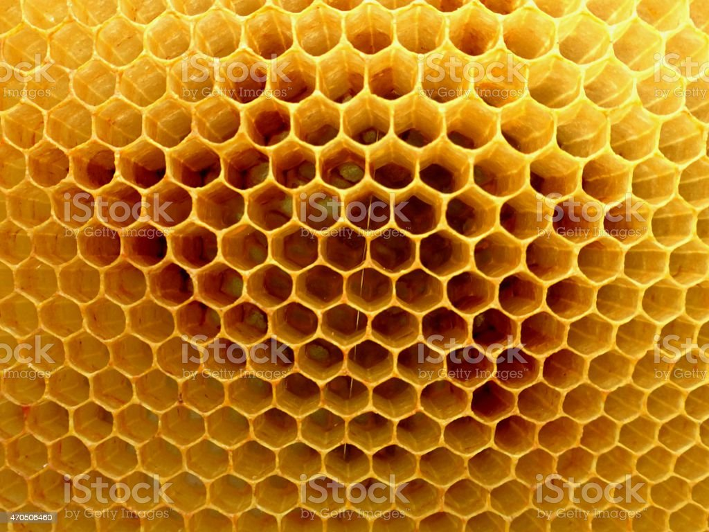 Detail of honeycomb stock photo