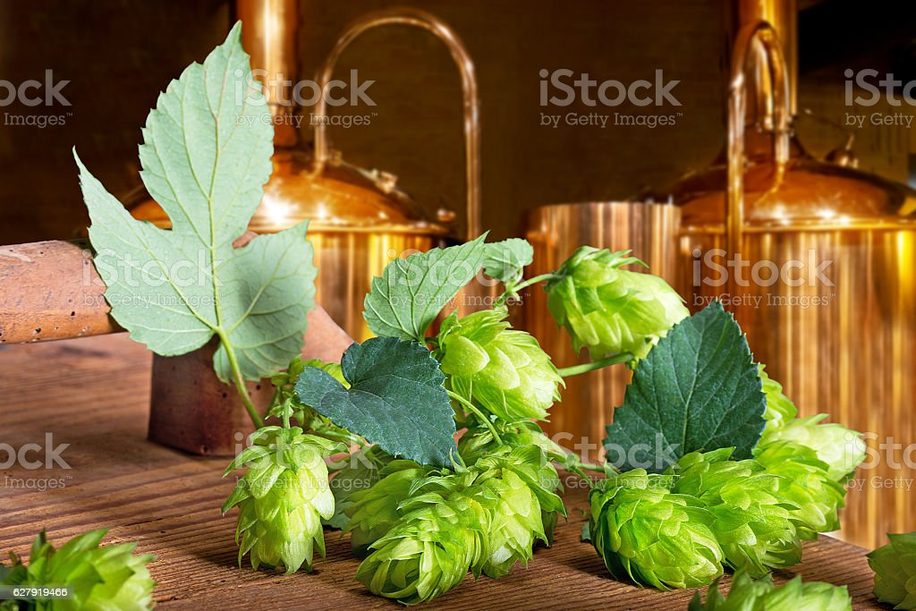 Detail of hop cones  in the brewery stock photo