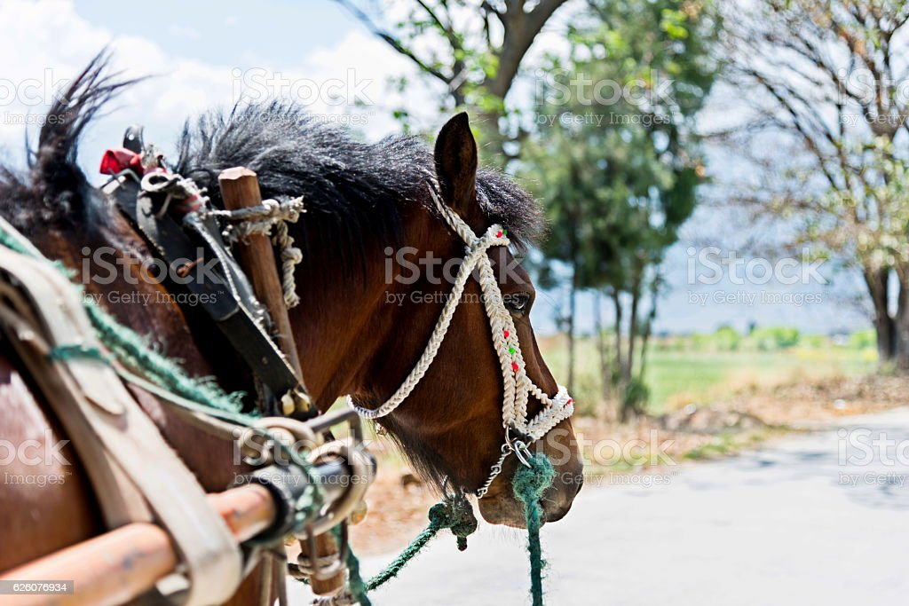 Detail of horse and cart stock photo