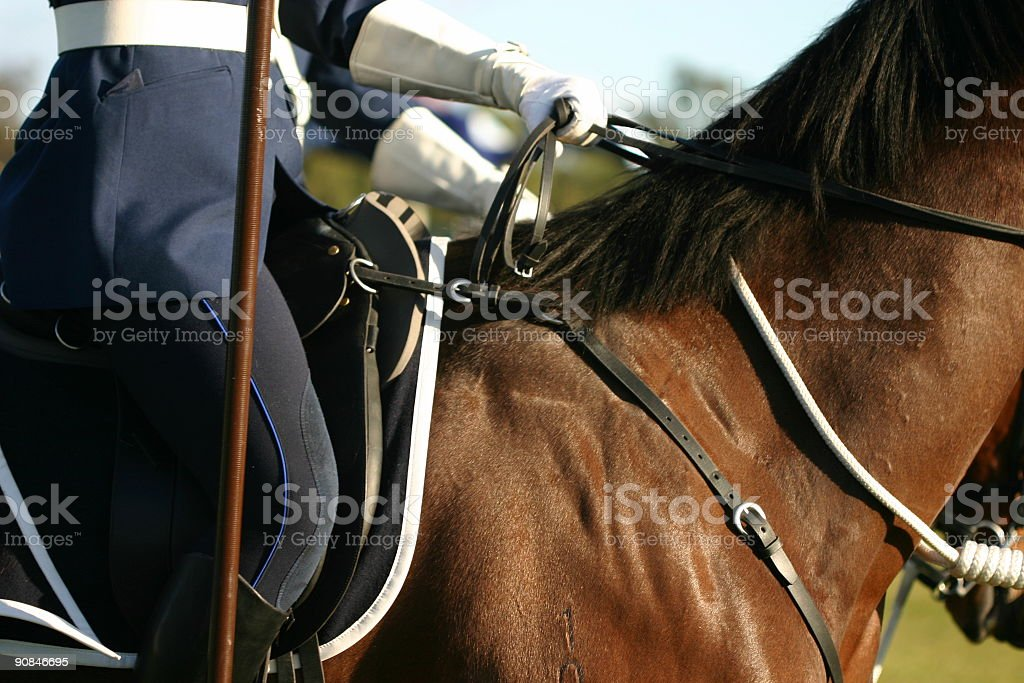 detail of horse stock photo
