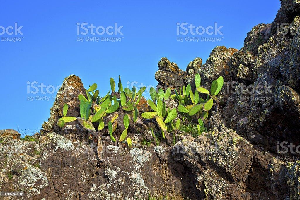 detail of large cactus stock photo