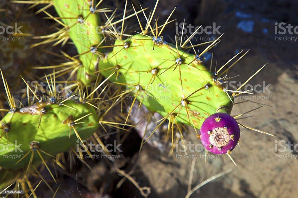 detail of large cactus royalty-free stock photo
