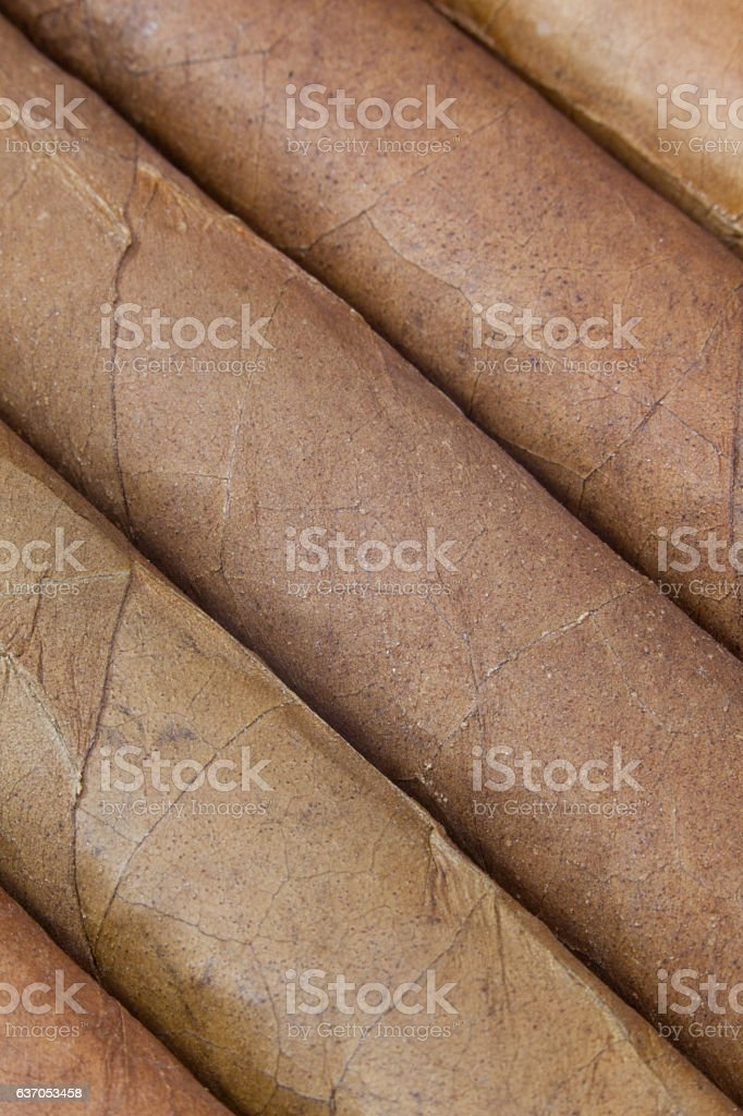 Detail of luxury Cuban cigars in the box stock photo
