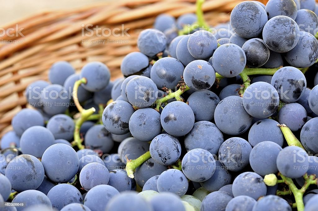 Detail of red vine grapes in basket stock photo
