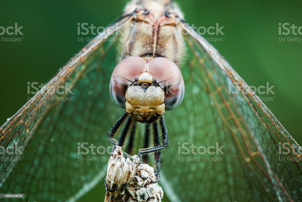 detail of the eye of a dragonfly in the foreground stock photo