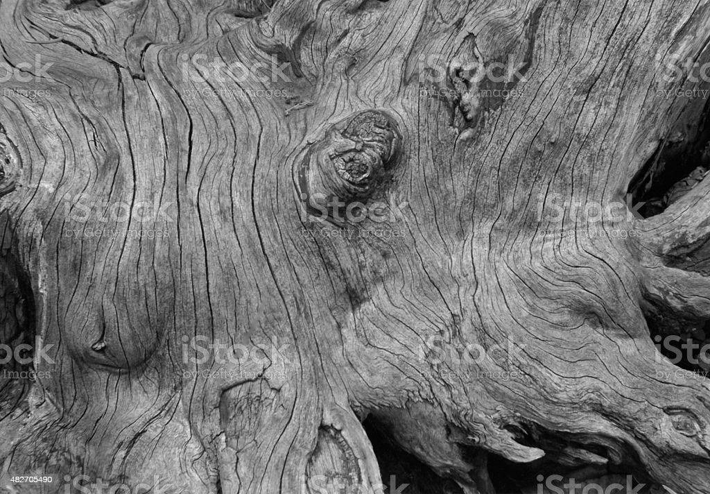 Detail Of Tree Trunk And Roots stock photo