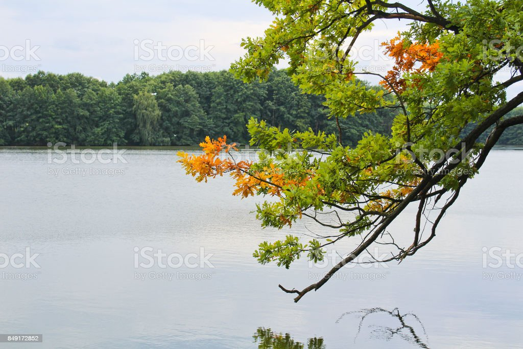 Detail of tree trunk with brown fall leaves and pond, Czech landscape stock photo