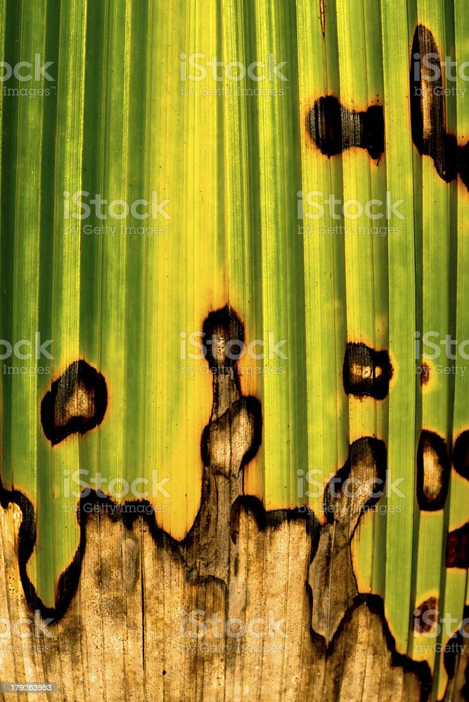 Detail of tropical leaf royalty-free stock photo