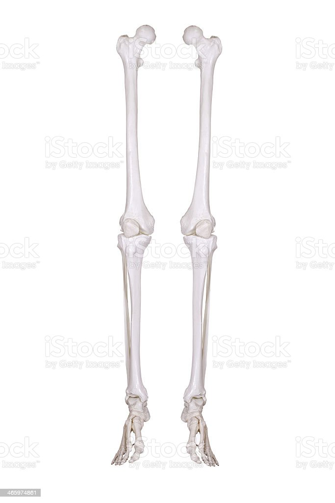 detail of two skeleton legs stock photo
