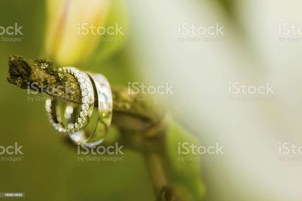 Detail of wedding rings on a tree royalty-free stock photo