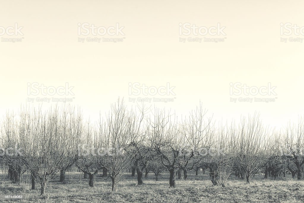Detail of Winter Vegetation in Italy stock photo