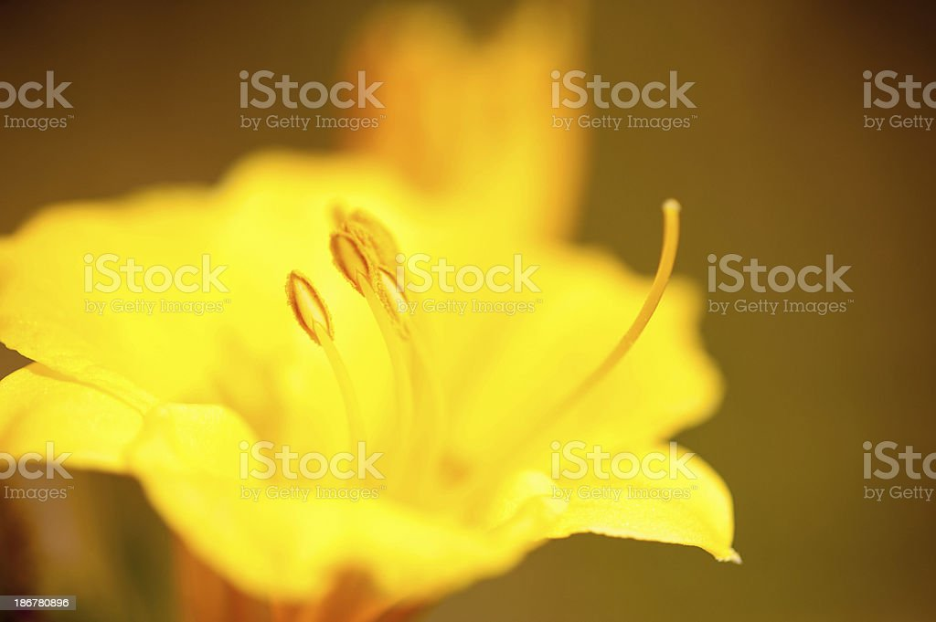 Detail of Yellow Flower stock photo