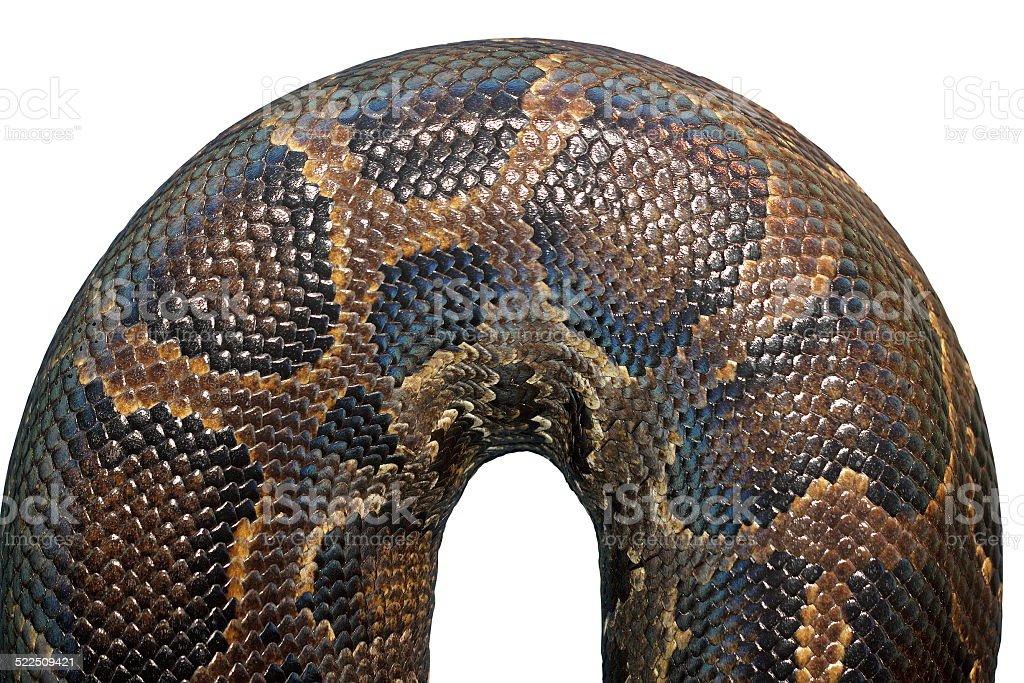 detail on  burmese python skin stock photo