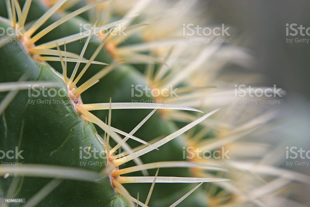 Detail shot of a cactus stock photo
