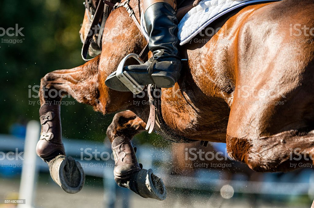 Detail shot of a Show Jumper horse in Mid Flight stock photo