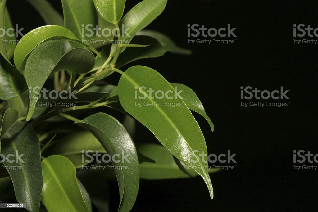 Detail shot of plant, isolated on black, stock photo