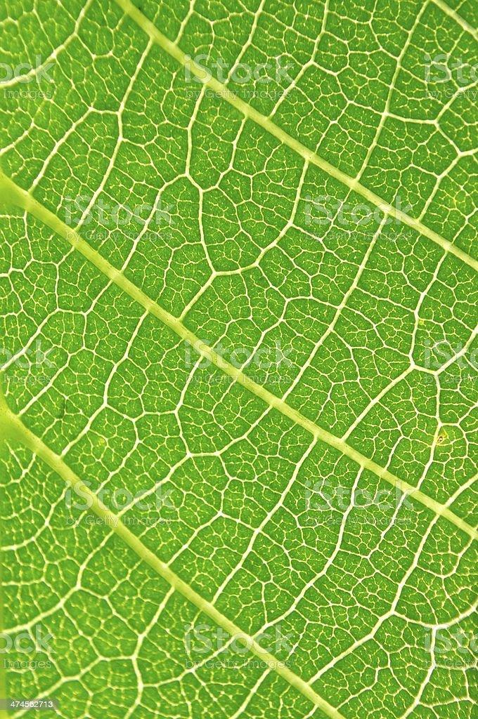 Szczegół widok green leaf tekstura płótna zbiór zdjęć royalty-free