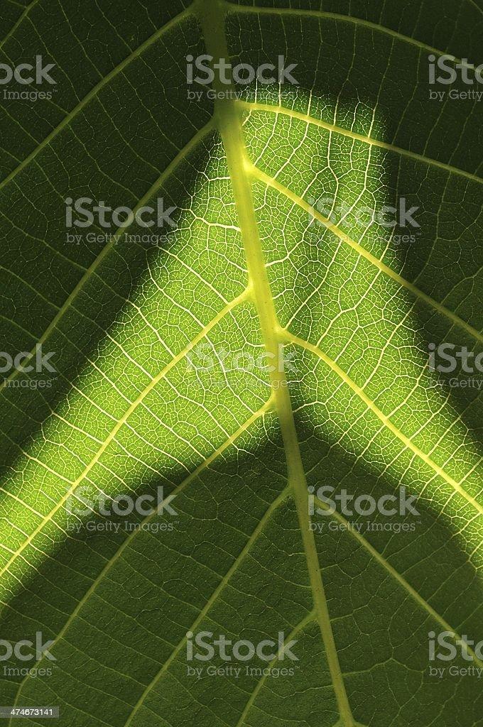 Szczegół widok zielony liść z światło i cień zbiór zdjęć royalty-free